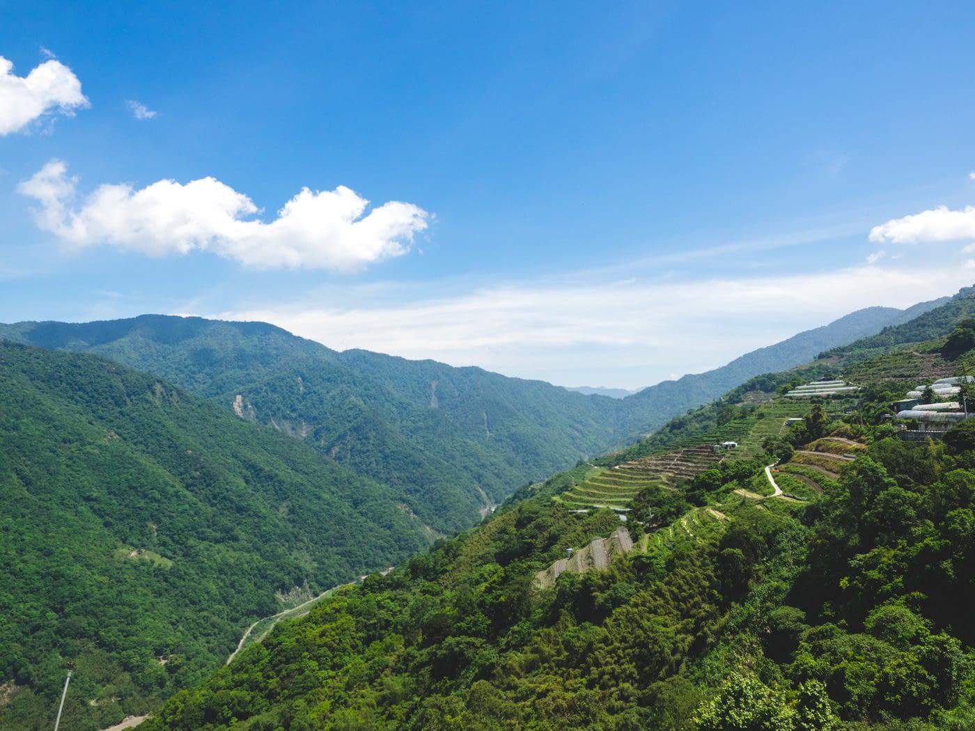 Taiwan - Qingjing - Plantation on a mountain