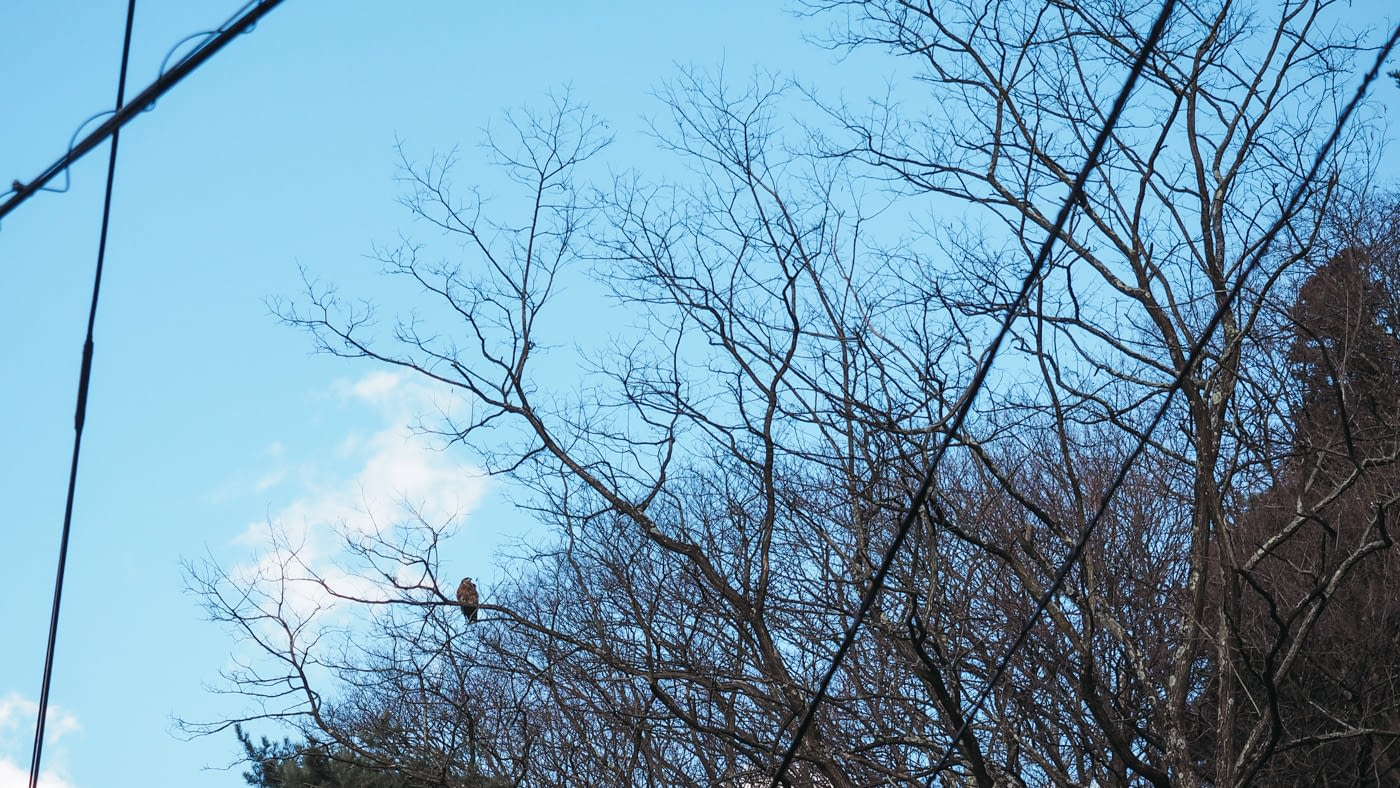Japan - Mount Fuji - Spotted an eagle