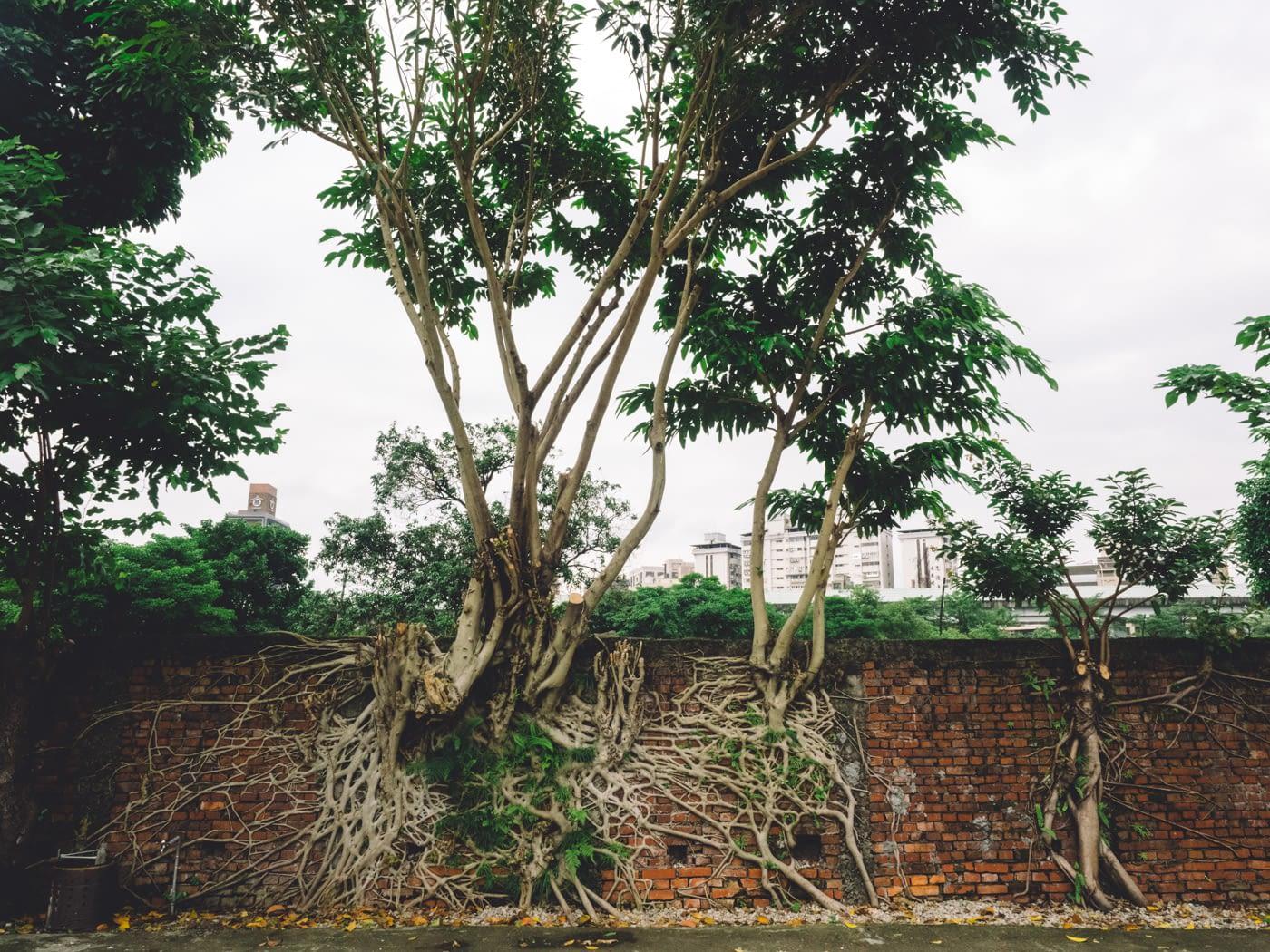 Taiwan - Huashan 1914 Creative Park - Tree roots through bricks