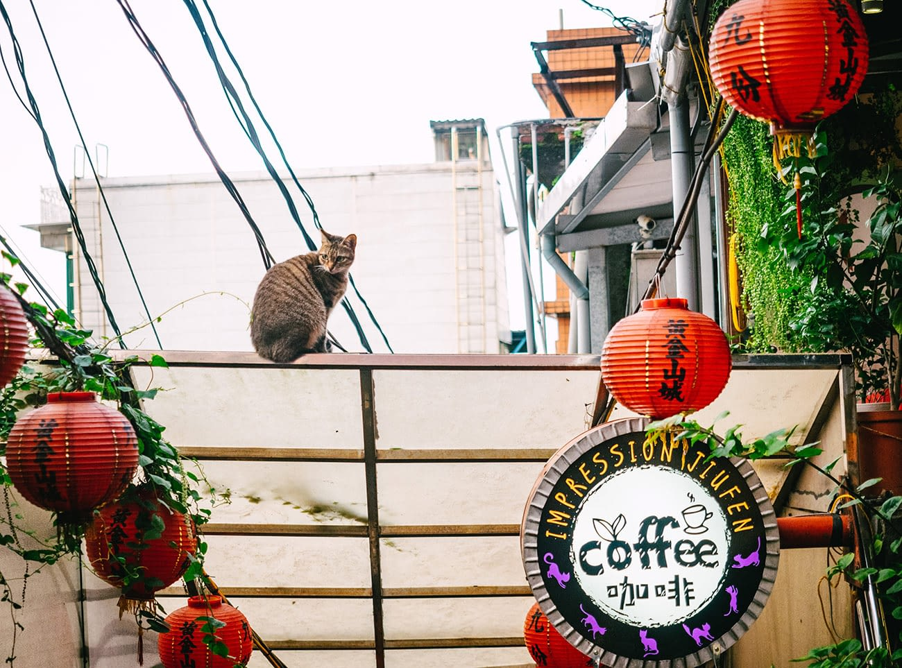 Taipei Jiufen - Cat on the roof