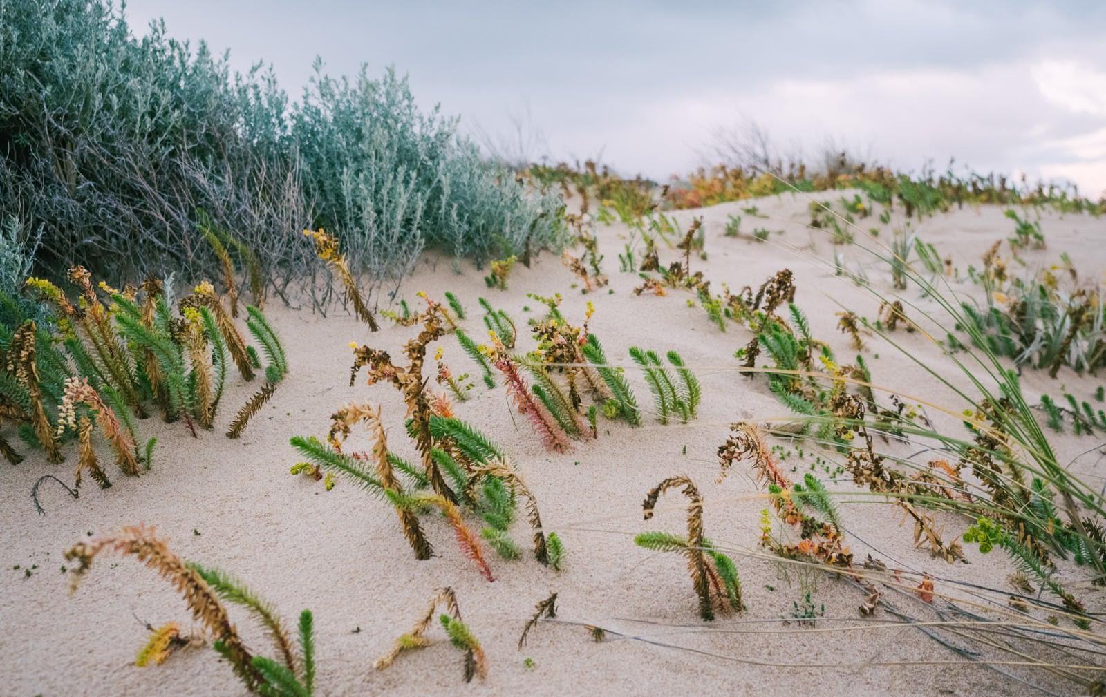 Perth, Australia - Preston beach - Colourful grass