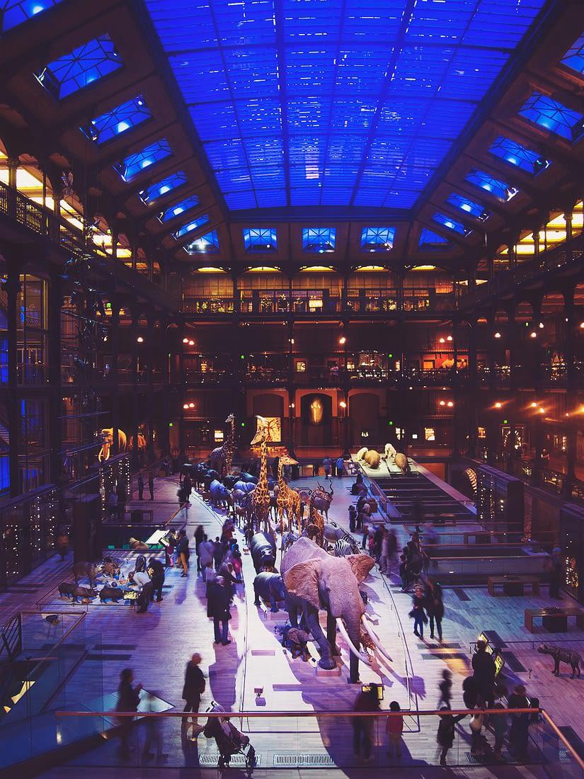 paris-day10_Grand_Gallery_of_Evolution-24