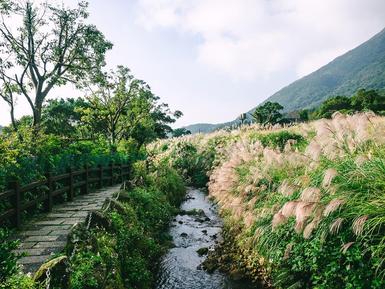 Yangmingshan - Field